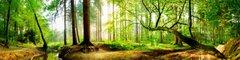 Wald, Blätter & Bäume
