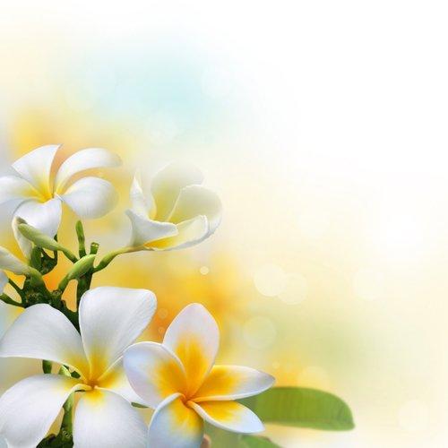 Foto-Leinwand ohne Rahmen - Frangipani Blüte (von Jumpeestudio)
