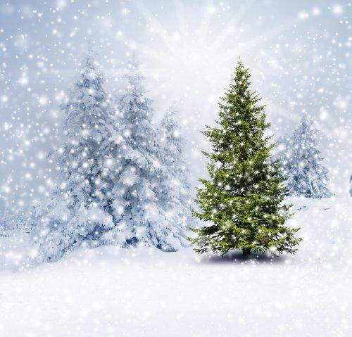 Foto-Leinwand ohne Rahmen - Tannenbaum im Schnee (von by-studio)