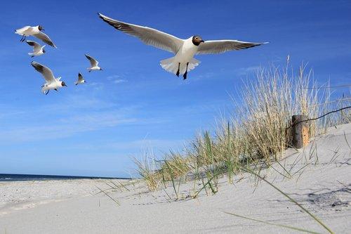 Foto-Leinwand ohne Rahmen - Möwen am Strand (von Linda Dahrmann)