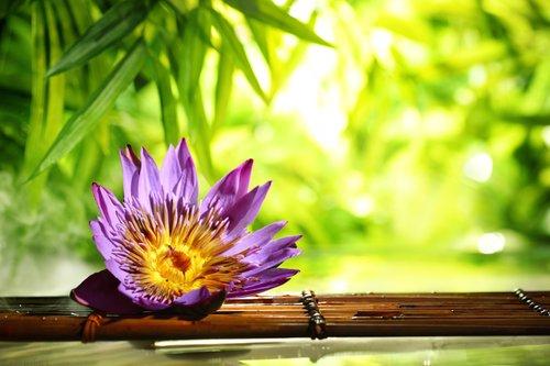 Foto-Leinwand ohne Rahmen - Lotusblüte (von lily)